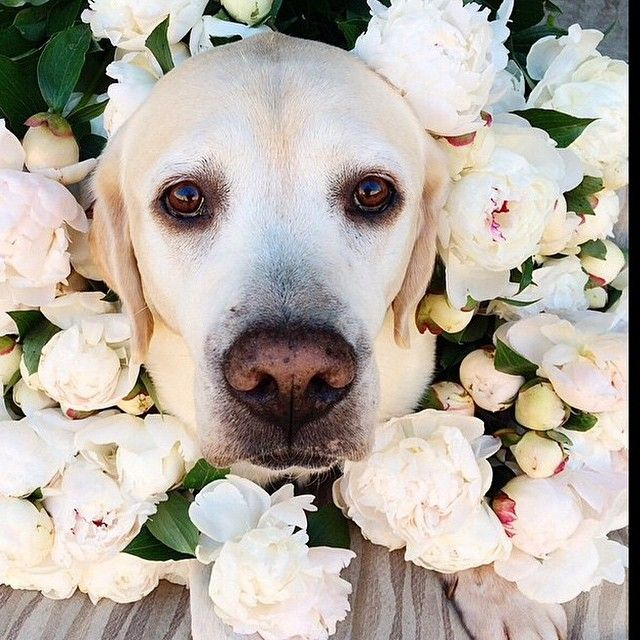 #ShareIG We love seeing furry friends at #weddings! Regram from @docksidegroupweddings. #weddinginspiration #dogsofinstagram #weddingdogs