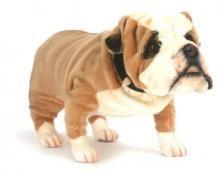 Hansa's imposing British Bulldog.