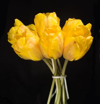 fav flower is a tulip but not sure for a wedding?