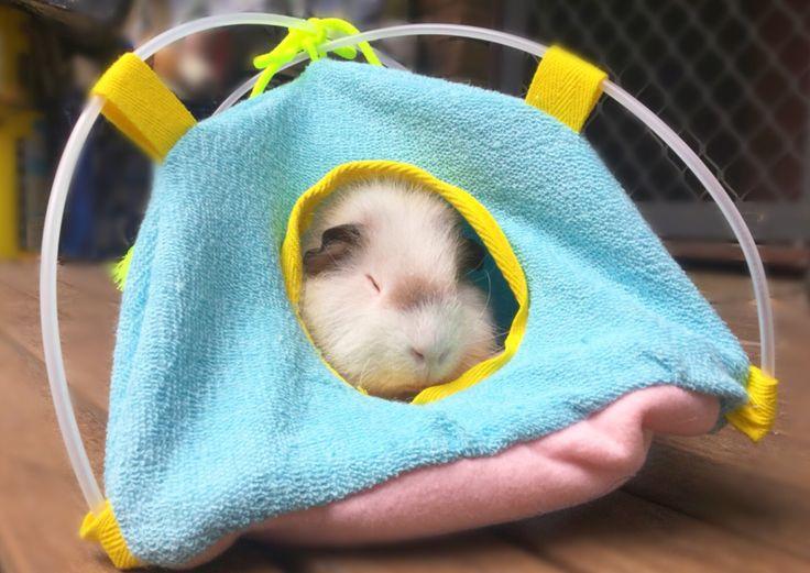 Fleece Guinea pig tent