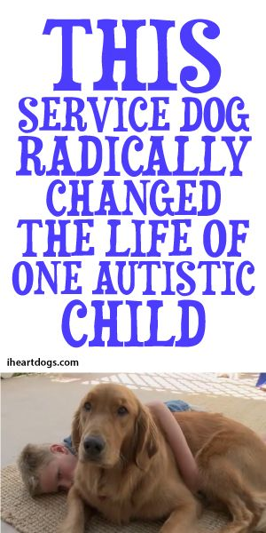 This Service Dog Radically Changed The Life Of One Autistic Child <3