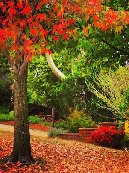 Canberra, Australia in autumn.