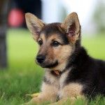 Top 10 Awwww-Inducing Cute Dog Names - PetGuide