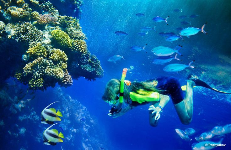 Diving and Snorkeling- on the great barrier reef in Cairns, Townsville, Magnetic Island and Port Moresby PNG - yay love it