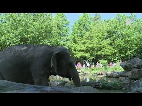 'Het olifantenjong kan ieder moment geboren worden' - BlijdorpZoo Rotterdam on YouTube