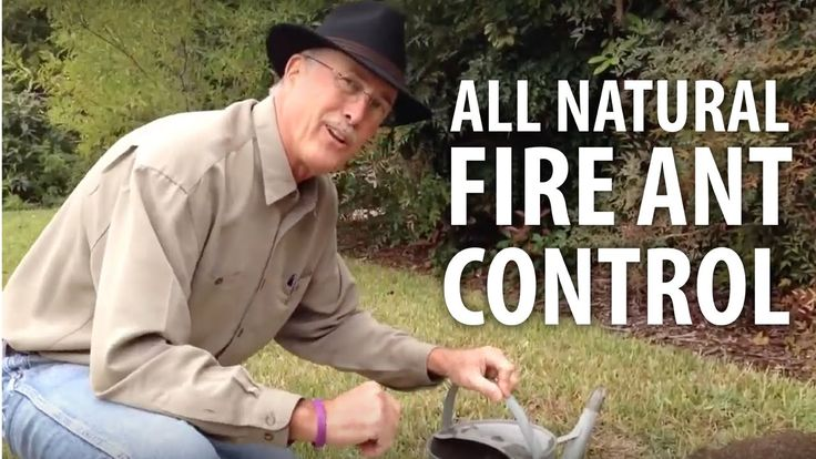 how to kill fire ant mounds naturally