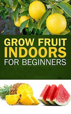 BEST FRUITS TO GROW INDOORS