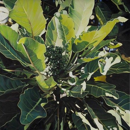Jane Puckey - A limited edition of 200, this Giclée reproduction from a painting of Puka leaves and berries from a visit to Tiritir Matangi island, achieves superb colour with pigment-based inks on acid-free 308gsm Hahnemuhle Rag paper suitable for museum or gallery display. Image size 316x316mm $269.00