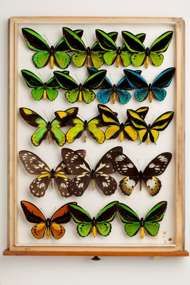Incroyable Butterfly Drawer At Carnegie Museum Of Natural History