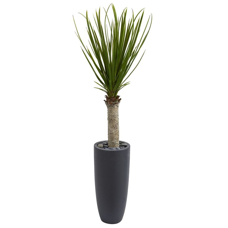 Nearly 4' Yucca Tree in Gray Cylinder Planter