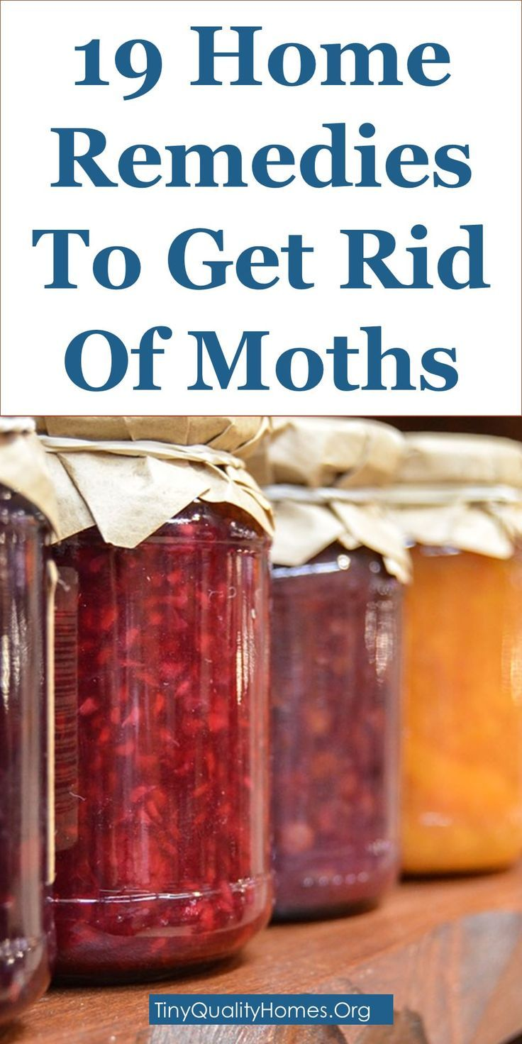 19 Home Remedies And Moth Repellents To Get Rid Of Moths   This Guide Shares Insights On The Following; Moth Larvae In Carpet, Clothes Moth Larvae, Moth Larvae On Ceiling, Moth Larvae On Wall, What Causes Moths In The House, Homemade Moth Repellent, Pantry Moth Larvae, Tiny White Worms In House, Etc.