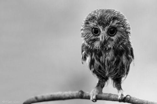 Sha, little bird.