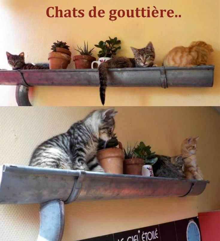 Populaire 481 best RECYCLAGE images on Pinterest | Newspaper, What to do and  ZE43