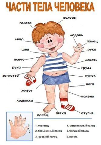 Изучаем тело человека . - Поделки с детьми | Деткиподелки