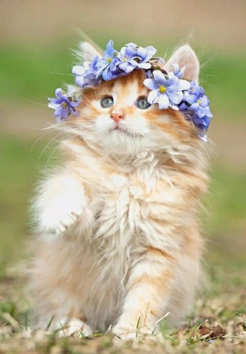 Ohh, how sweet!! LOVE kitties and purple!! ♥♥