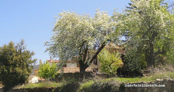Perales de donguindo, Aranjuez y de Roma en Navaescurial