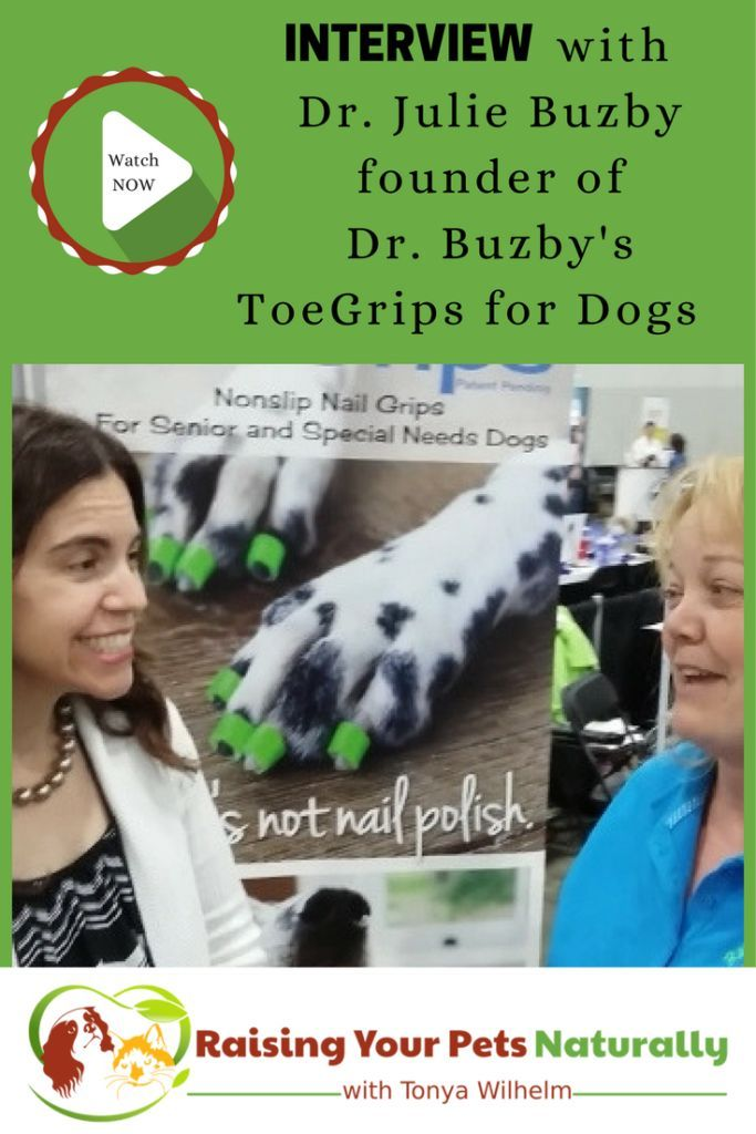 Senior And Special Needs Dogs An Interview With Dr Julie Buzby