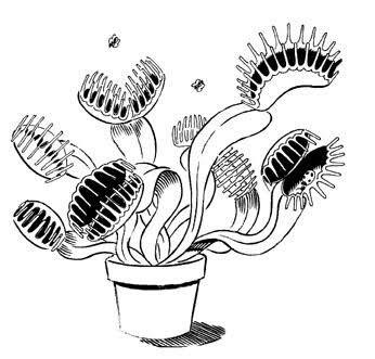 Тюльпан, цветок мухоловка рисунок карандашом прикольный