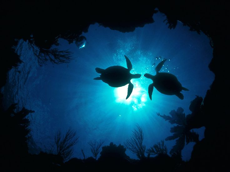 turtles above