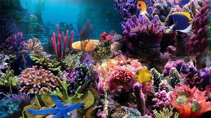 Fish Tank Background Printable 50 Best Aquarium Backgrounds Aquarium Backgrounds Cool Fish Tanks Aquarium