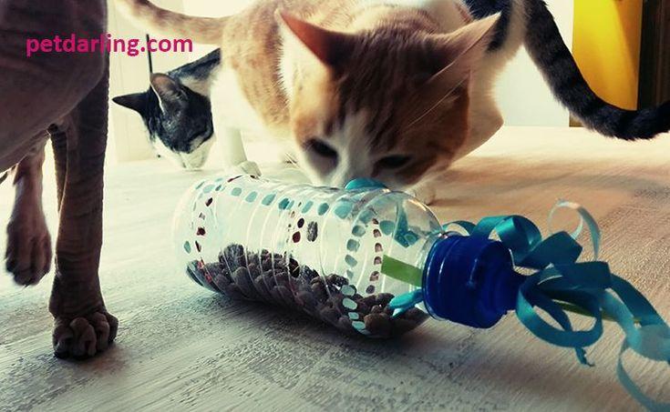 juguetes caseros para gatos                                                                                                                                                     Más