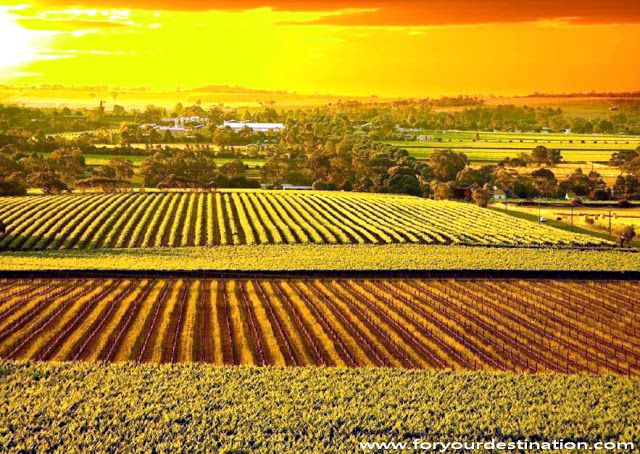 Barossa Valley Tourist Attractions