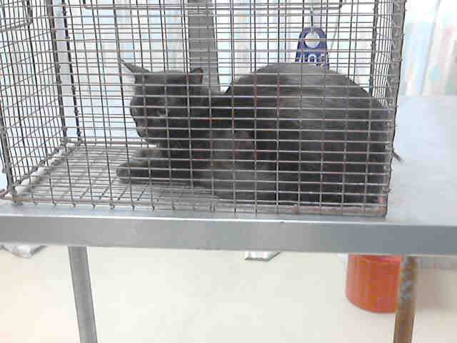 Id A410396 Black Dsh Arrived July 10 2014 Harris County Public Health And Environmental Services Veterinary Public Animal Shelter Humane Society Shelter