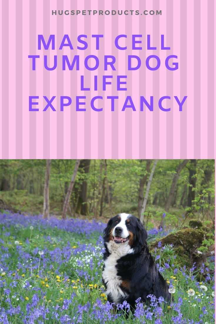 Canine Mast Cell Tumors: Symptoms, Diagnosis and Treatment