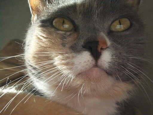 My cat ❤