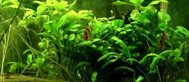 Relaxing aquarium video