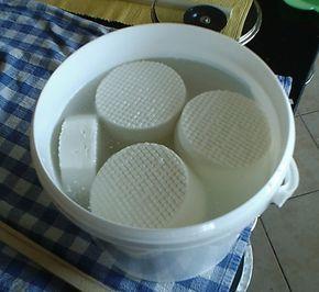 Camembert selber machen