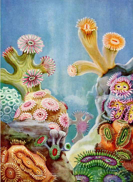 coral reef sea life artwork else bostelmann polyps and
