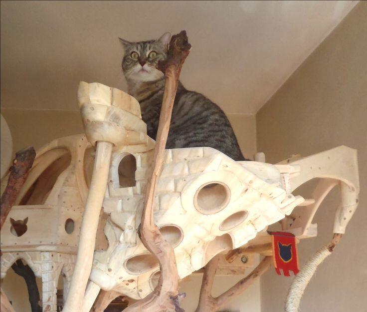 DomusfeliS - special playzones for cats - Unique pieces for unique cats - sculptures for cats, untreared precius wood: plum, apricot, seasoned poplar, birch, bamboo, oak and piracanta. #catcastle #cattree #cattower #catcondo #cattoy #petdesign #felinelovers #catenclosure #amazingcatscratching #catscratchforniture