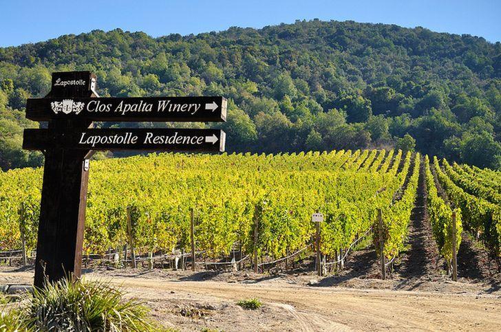 willamette valley vineyards events