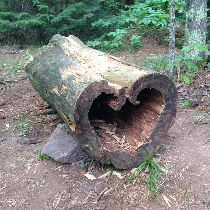 Heart Tree Copper Falls State Park Wisconsin