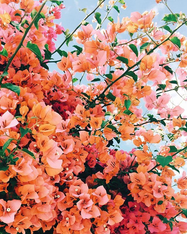 Spring Has Sprung And All Feels Right In The World Nature Aesthetic Flower Aesthetic Spring Aesthetic