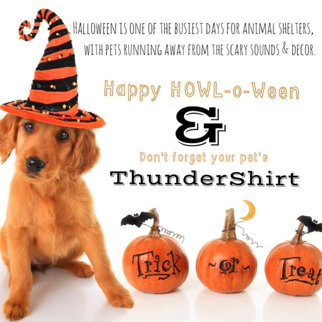 It's CONTEST time!! Help us spread the word and keep our pets safe this Halloween! Look out for these Halloween safety images, and the more you share, the better chance you'll have to win! Find them here on Facebook, on our Pinterest page, Twitter, Instagram, and our blog! We'll randomly select one winner on INSTAGRAM to win a $100 shopping spree on our website! Make sure to include hashtag #ThunderTIPS when sharing!