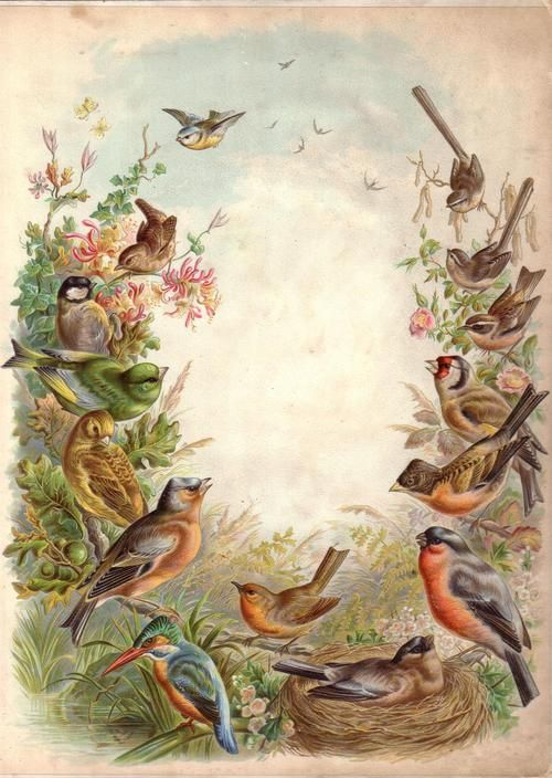 Frontispiece to a Victorian photograph album showing various British birds ( kingfisher, bullfinch, chaffinch, wren, blue tit, great tit, greenfinch, yellowhammer, robin, goldfinch, firecrest, brambling, long-tailed tit etc).