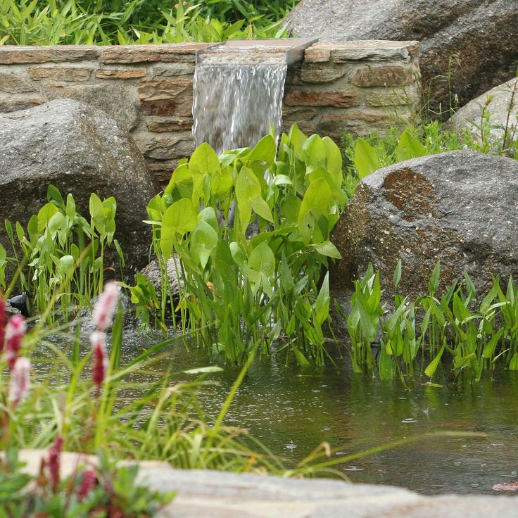 vodní rostliny / aquatic plants