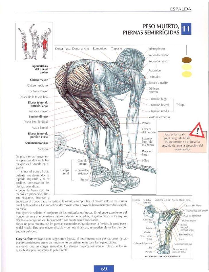 Berühmt Anatomie Websites Galerie - Anatomie Von Menschlichen ...