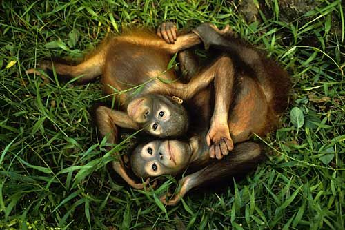 ORANGUTAN FRIENDLY - list of products and where to purchase them