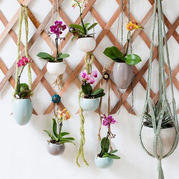 Style met een twist en laat de mini-orchideeën lekker bungelen! #intratuin #orchidee #bungelen #herfst