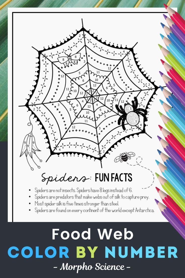 Food webs color by number science color by number