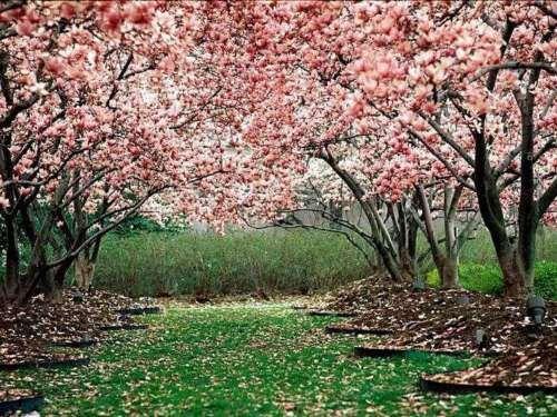 Recursos primavera http://www.symbaloo.com/mix/recursosprimavera