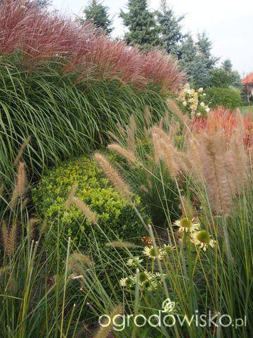 Marzenia i plany vs. rzeczywistość - strona 425 - Forum ogrodnicze - Ogrodowisko