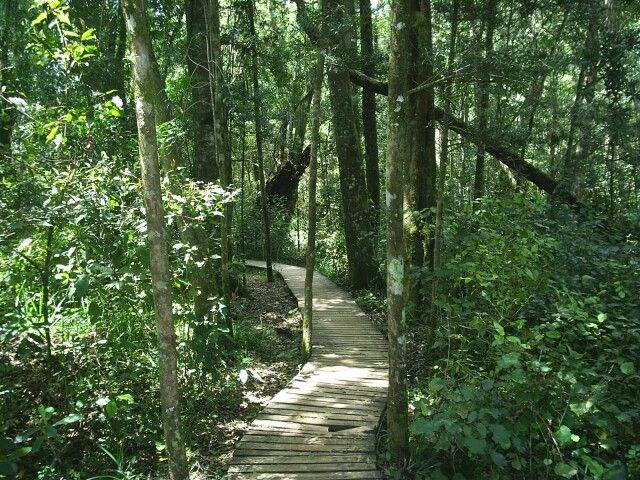 Tsitsikamma forest trail