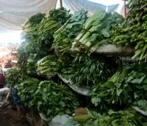 In nature vegetables are the must thing like they grow and we have fresh vegetables by the hard work of farmers and with the blessing of god who rains properly every year and we get fresh vegetables to eat