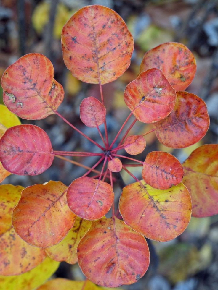 Planting Design: Late Fall Texture and Color | Plant design