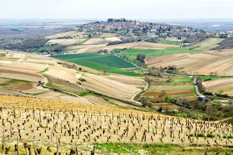 Sancerre Wine region in France. Chan visited in May 2012, had an aha moment about tasting wine for its flavours, of which kind of dirt it come from! The dirt!! So important to the French