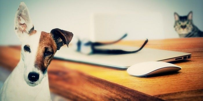 In many areas of the world, employees are increasingly finding favor with pet friendly workplace.